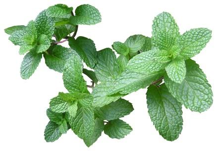 Mint Leaves (Pudina) - per bunch