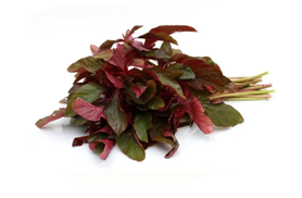 Red Amaranth/ Tambdi Bhaji per bunch