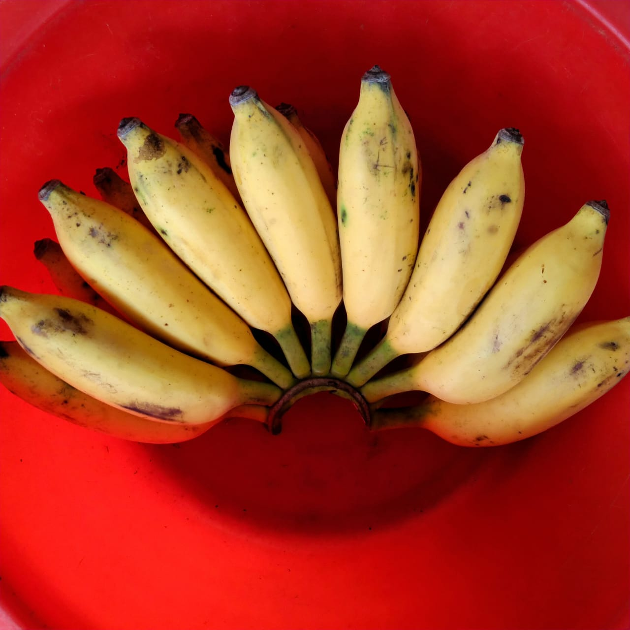 Bananas (Elaichi) per Kg