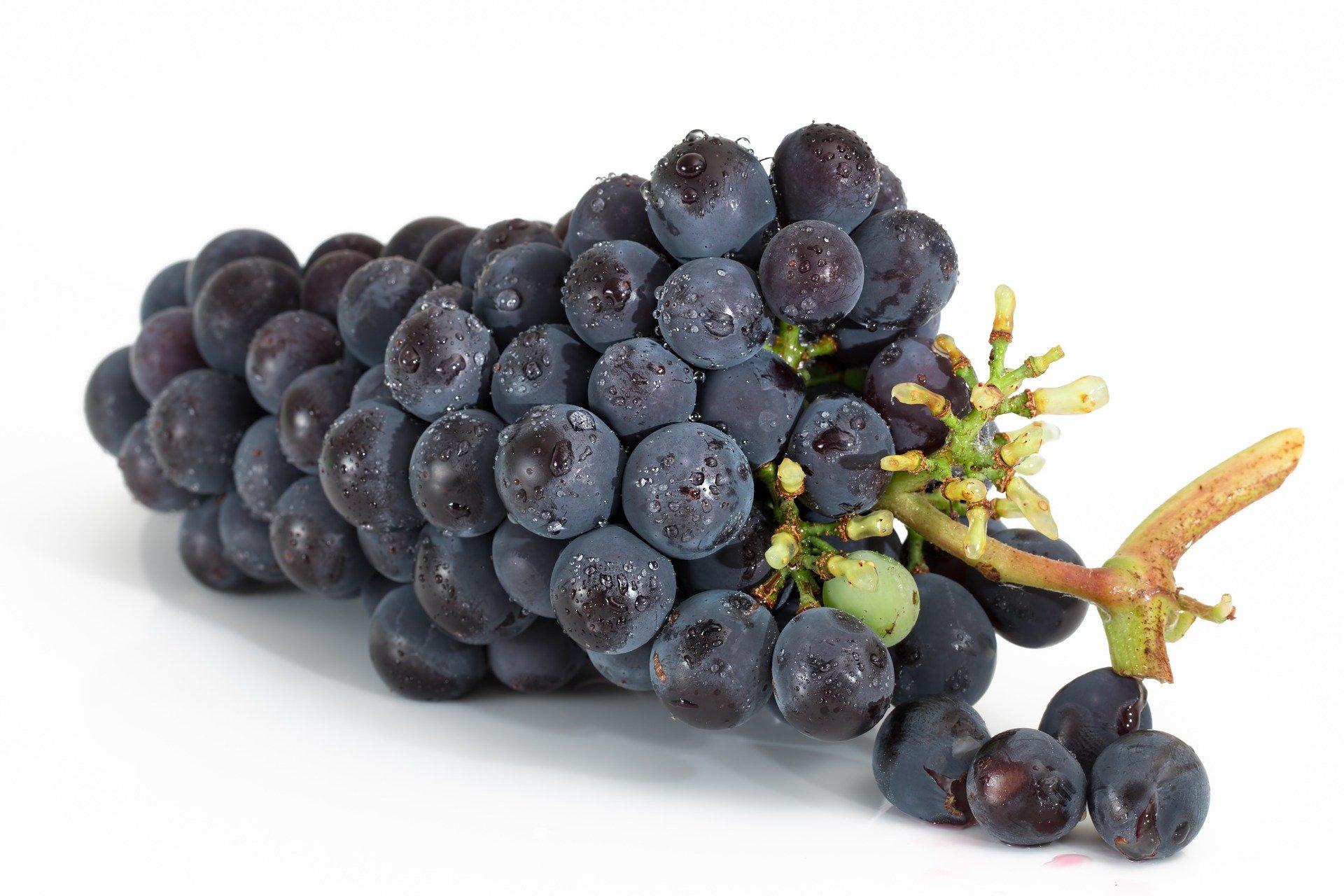 Grapes (Black)