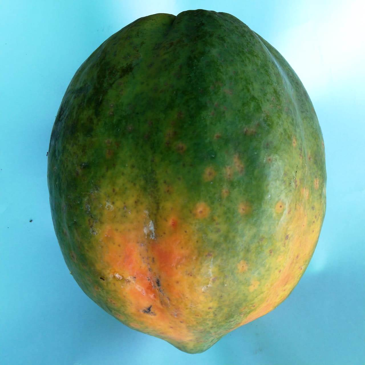 Papaya Per Piece
