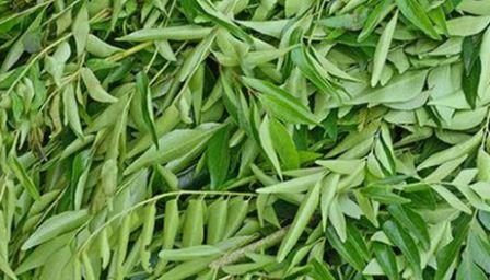 Curry Leaves - per bunch