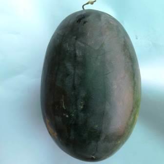 Gomulya Waterleon 2.5 Kgs