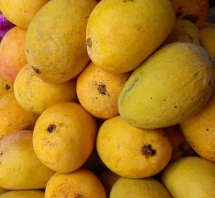 Alphonso mangoes per dozen
